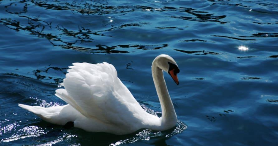 Royal Swan von Ainsworth Gaming: Eine vollständige Rezension